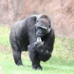 Пражский зоопарк — радость и детям, и взрослым!