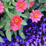 Пражский Ботанический сад — мир растений